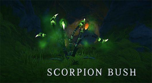 scorpion bush